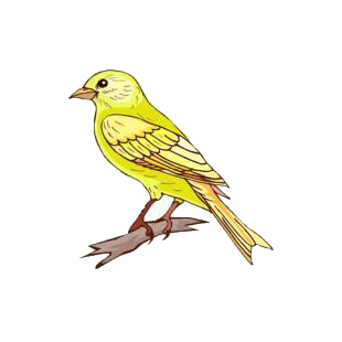 Bird canary pictures - Toy planet lanzarote ...