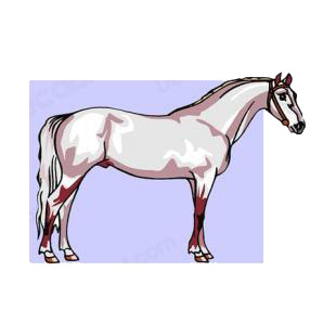 White horse listed in horse decals.