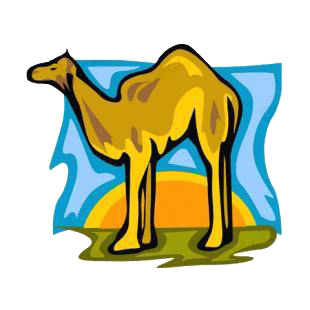 Camel listed in camel decals.