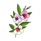 Pink and white flowers with leaves, decals stickers