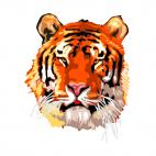 Tiger face, decals stickers