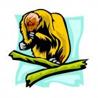 Baboon, decals stickers