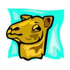 Camel face, decals stickers