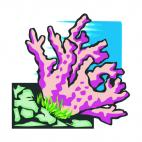 Coral, decals stickers